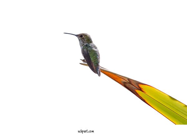 Transparent Animals Hummingbird Bird Beak For Bird for Animals