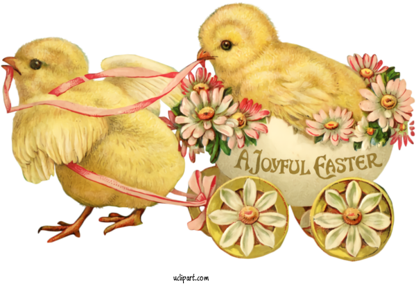 Free Holidays Bird Chicken Easter For Easter Clipart Transparent Background