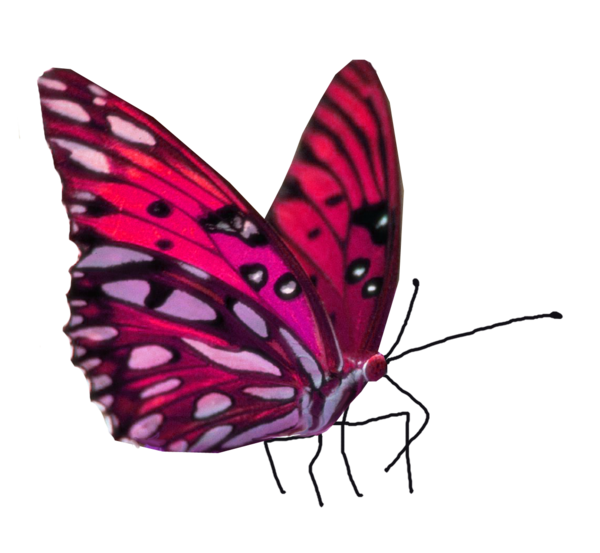 Transparent Gardening Butterfly Moths And Butterflies Insect Clipart for Activities