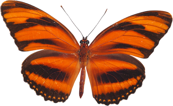Transparent Butterfly Butterfly Moths And Butterflies Insect Clipart for Activities