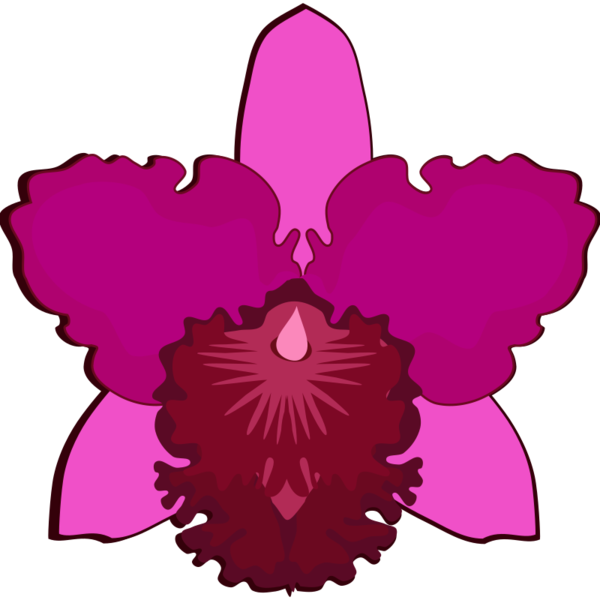 Transparent Plant Flower Magenta Petal Clipart for Nature