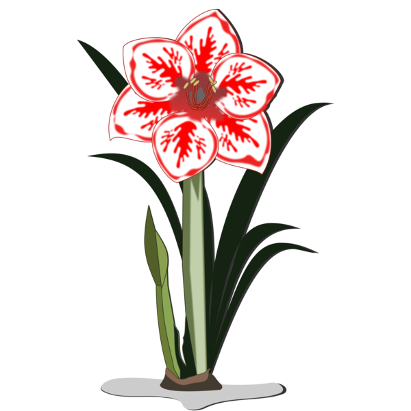 Transparent Plant Flower Plant Cut Flowers Clipart for Nature