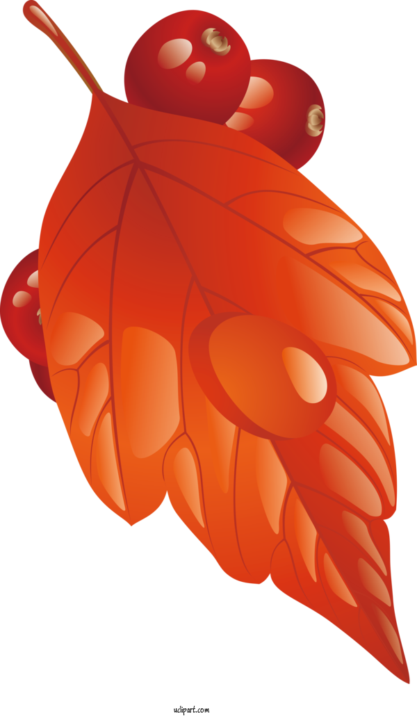 Transparent Nature Insect Pollinator Character For Leaf for Nature