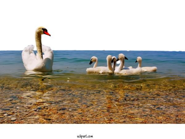 Transparent Nature Swans PC Da Zero Di Crestani Gianni For Landscape for Nature